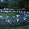 Longwood Gardens vying for new accolade