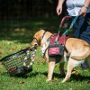 Canine Partners for Life Open House, Sept. 19