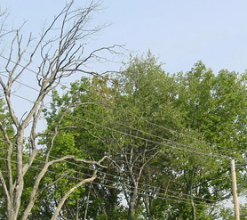 Peco said crews began working on pruning and selective tree removal in mid-August and will continue through December.