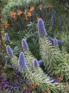 longwood spring blooms