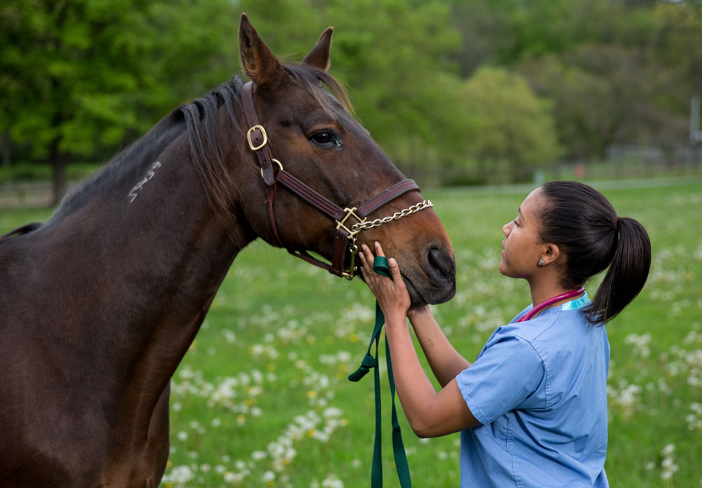"""Dr. Morgan Taylor is one of six veterinary students profiled in """"Life at Vet U"""" which begins airing this Saturday on Animal Planet."""